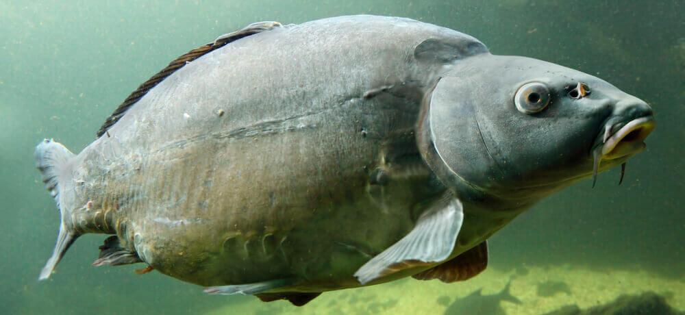 Najdłużej żyjące ryby